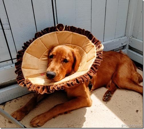 dog recovery collar alternative