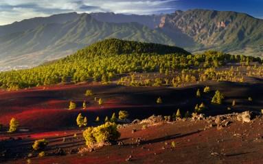 Floración del Pico de Graja en La Palma (Canarias)