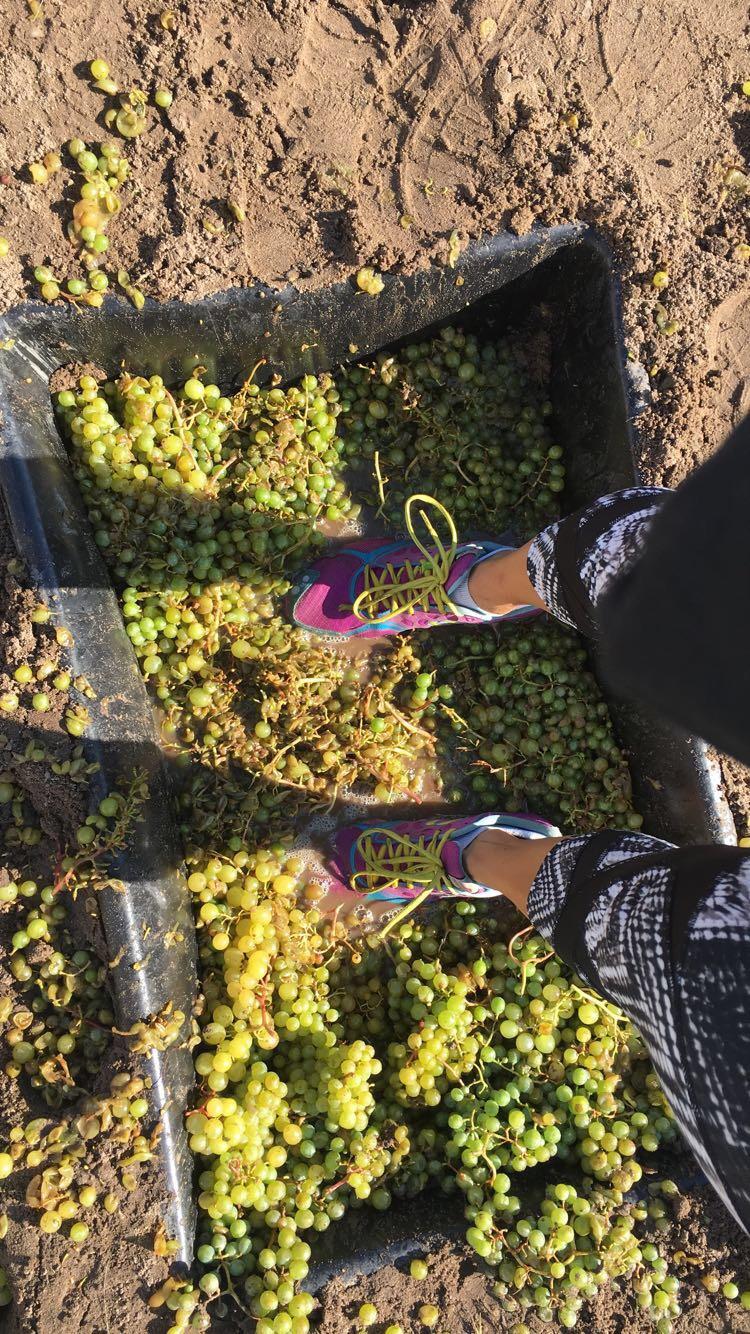 Harvest Stompede Race Recap - Run Leelanau