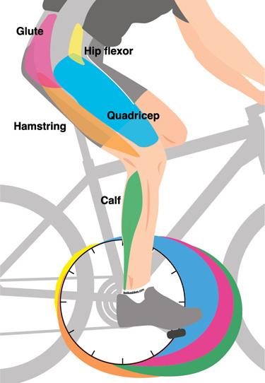 Μύες ποδιού στη ποδηλασία spinning