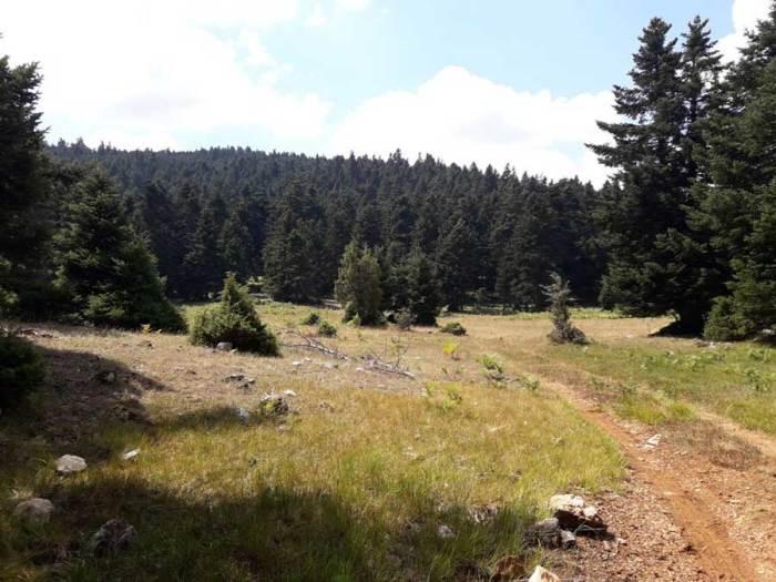 Kallidromo Trail Run Ορεινό Τρέξιμο