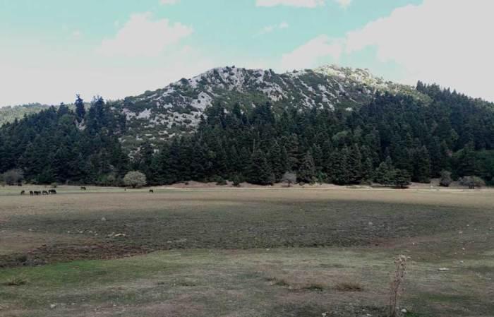 Καλλίδρομο Trail Run Λίμνη Ελευθεροχώρι
