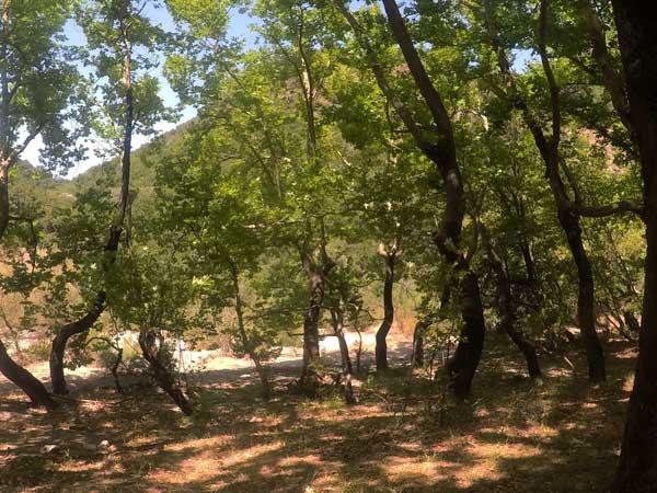 κάμπινγκ στο ποτάμι - Πλατάνια Εύηνος