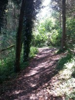 One of the two wooded sections of the route