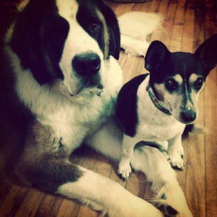dogs-good