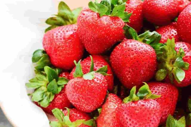 germinar fresas