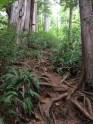 Lone Cone, Meares Island, up, trail, Tofino