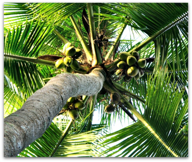 Are you Cuckoo for Coconuts?