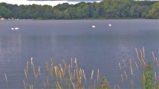 Talkin Tarn July 2016 (4)