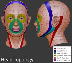 human-head-topology