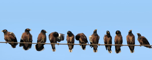 Birds-on-wire-edit