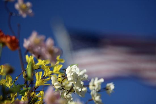 11.11 flag