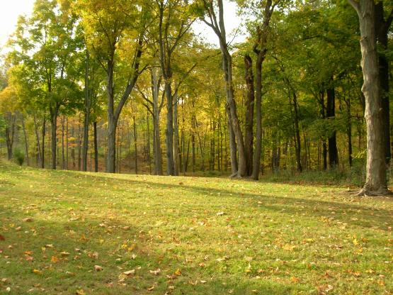Our Yard in Fall