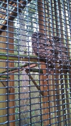 owlsraptor