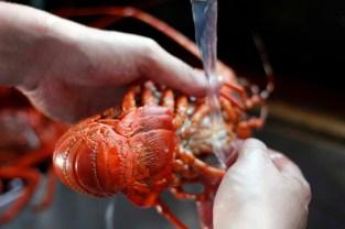 crayfish_kreef_runnybabbitcrafac