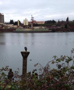 """The blue heron """"course marshall"""" that keeps a watchful eye along the 10K route. Photo credit: Amanda Ulrich"""