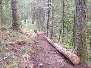 A photo of the trail in Miller Woods. Credit: John Spencer.