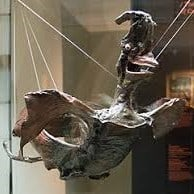 jenny haniver made from a ray or skate