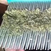 lice and nits on a lice comb
