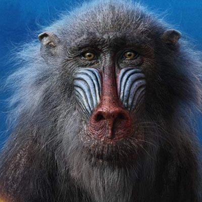 Lion King: Rafiki