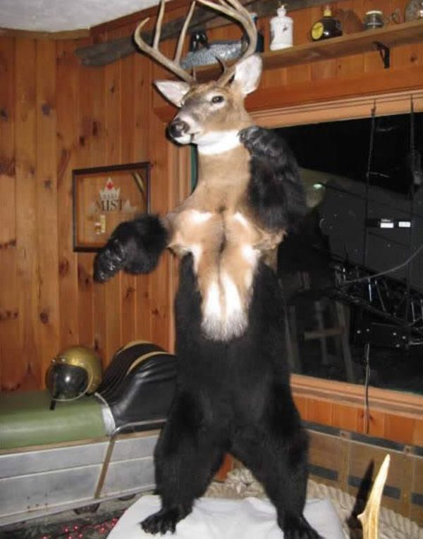 42 Funny Taxidermy Fails Just Waiting To Creep Into Your