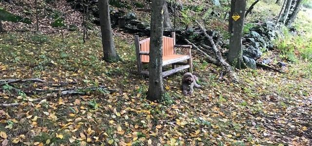 Larry's Bench
