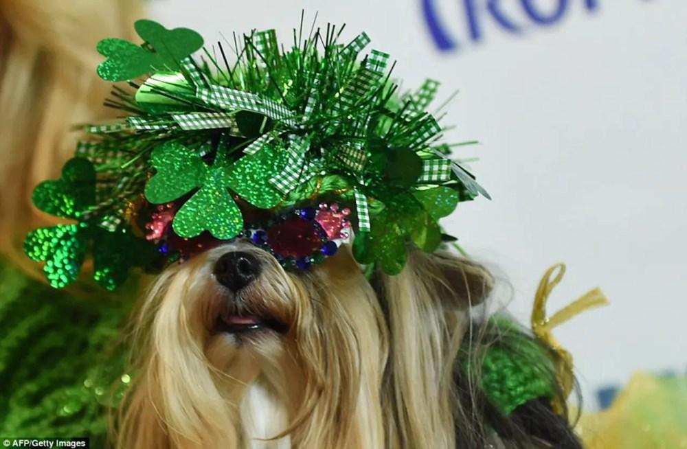 New York Pet Fashion Show by Runway Magazine