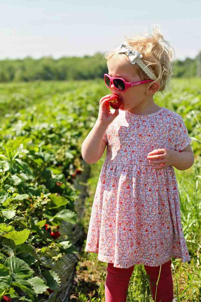 pick your own strawberries with kids