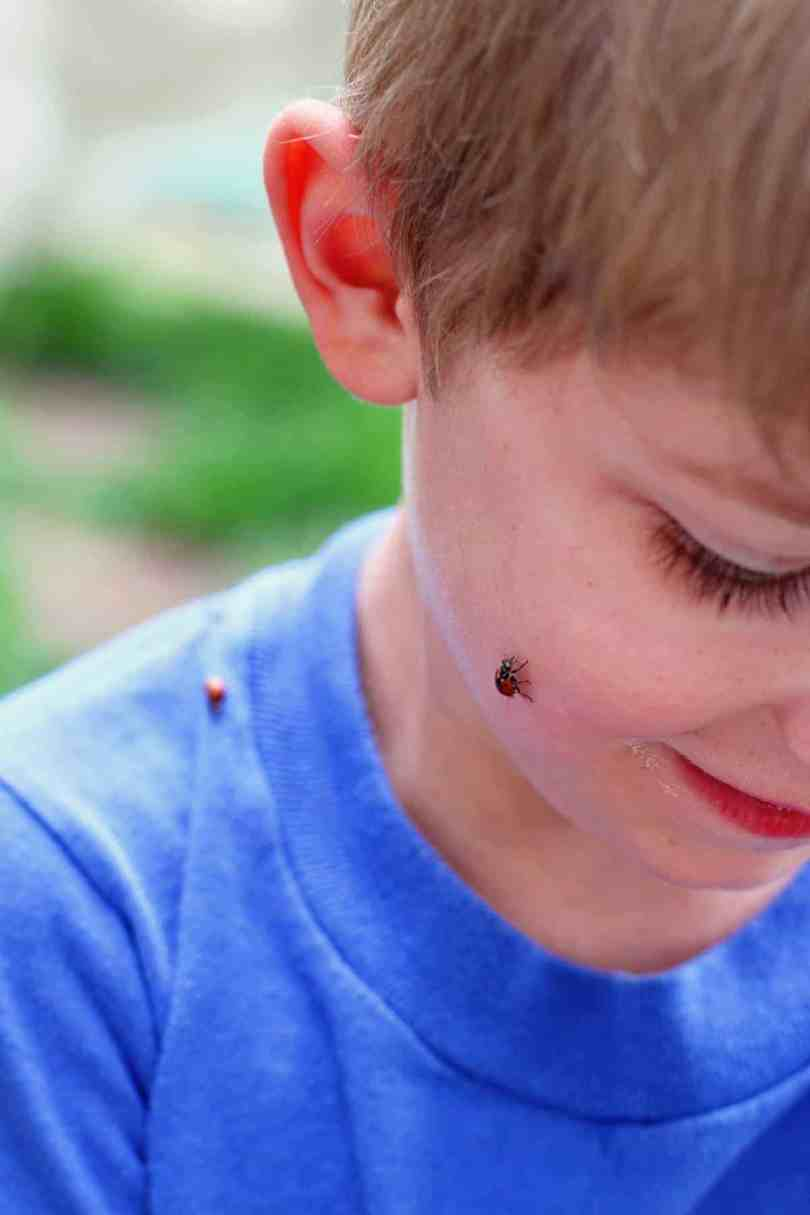 releasing ladybugs into your garden with kids