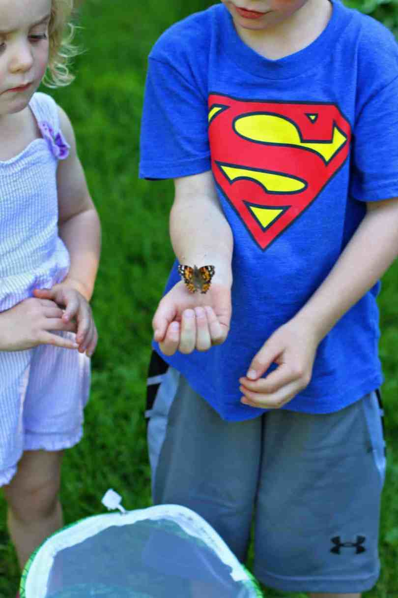 raising your own butterflies from caterpillars