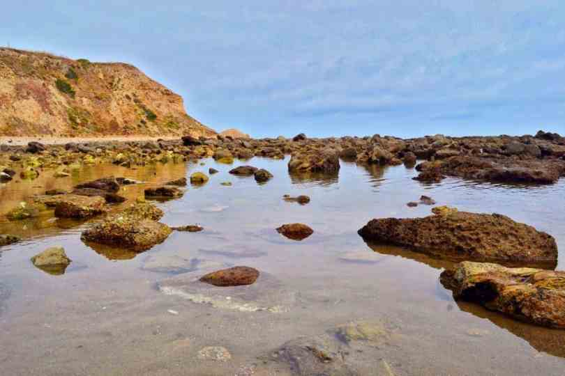 exploring tide pools with kids California