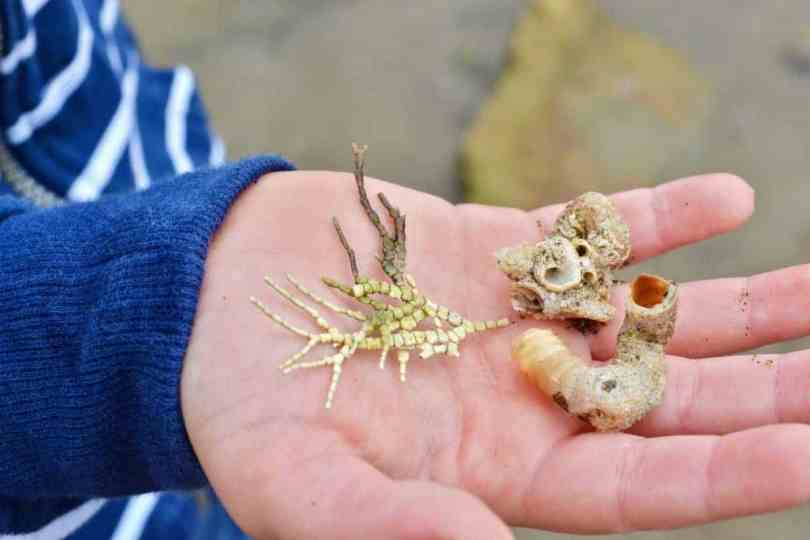 tidepool treasures