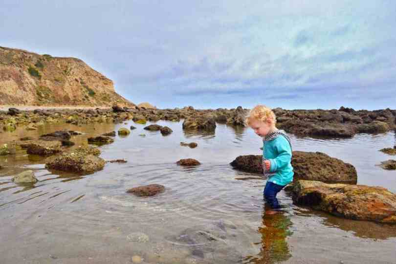 Exploring Tidepools California beach