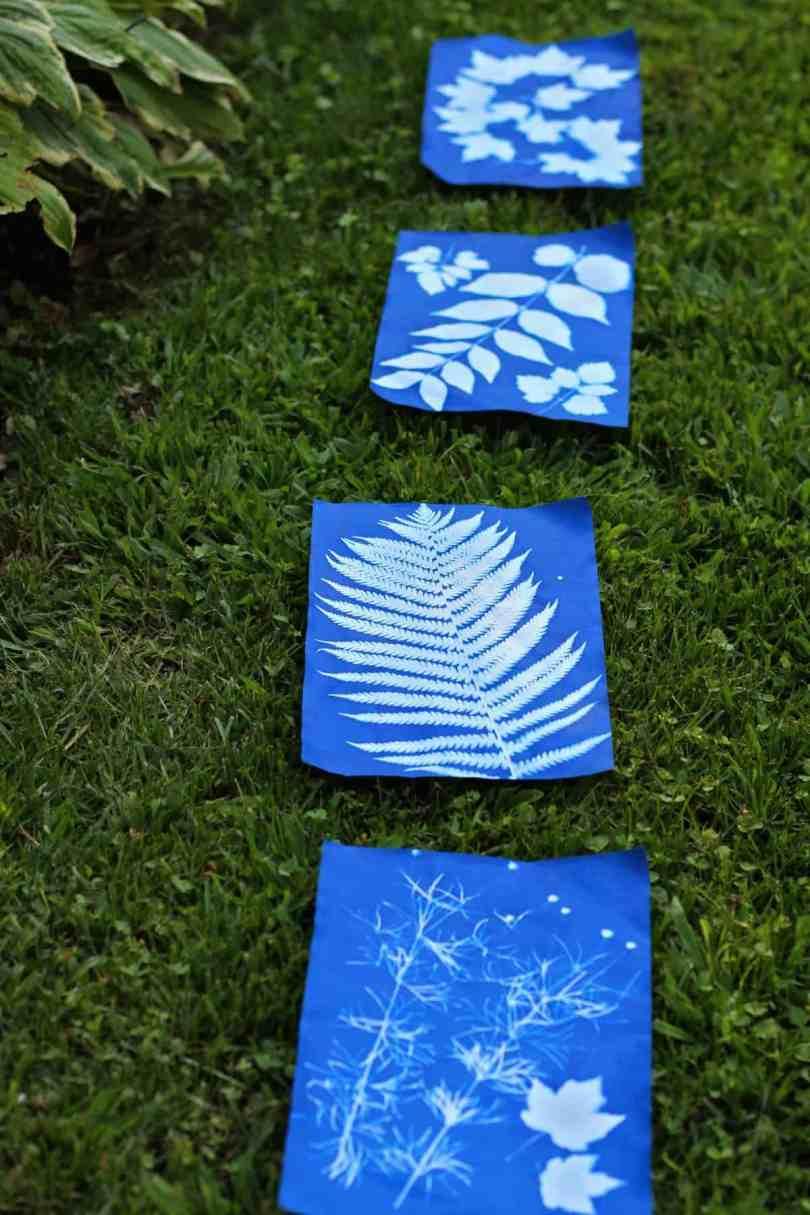 sun print nature art