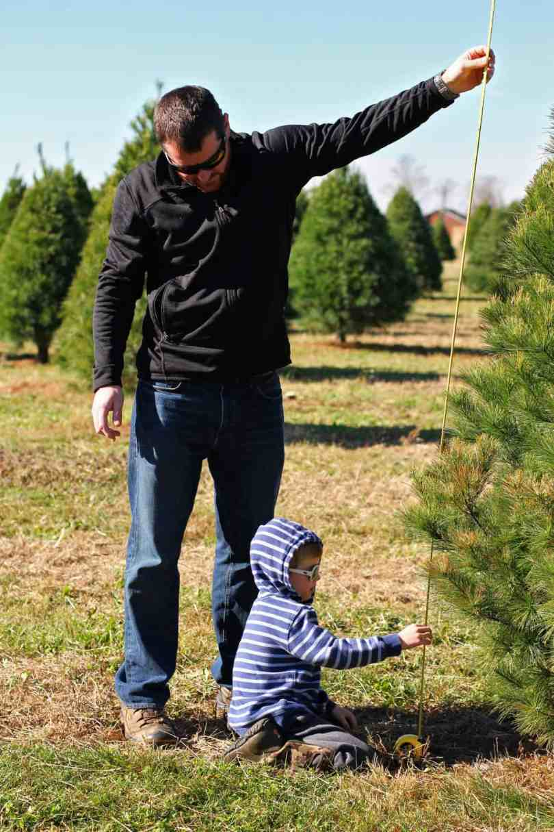 tips for cutting down your own christmas tree