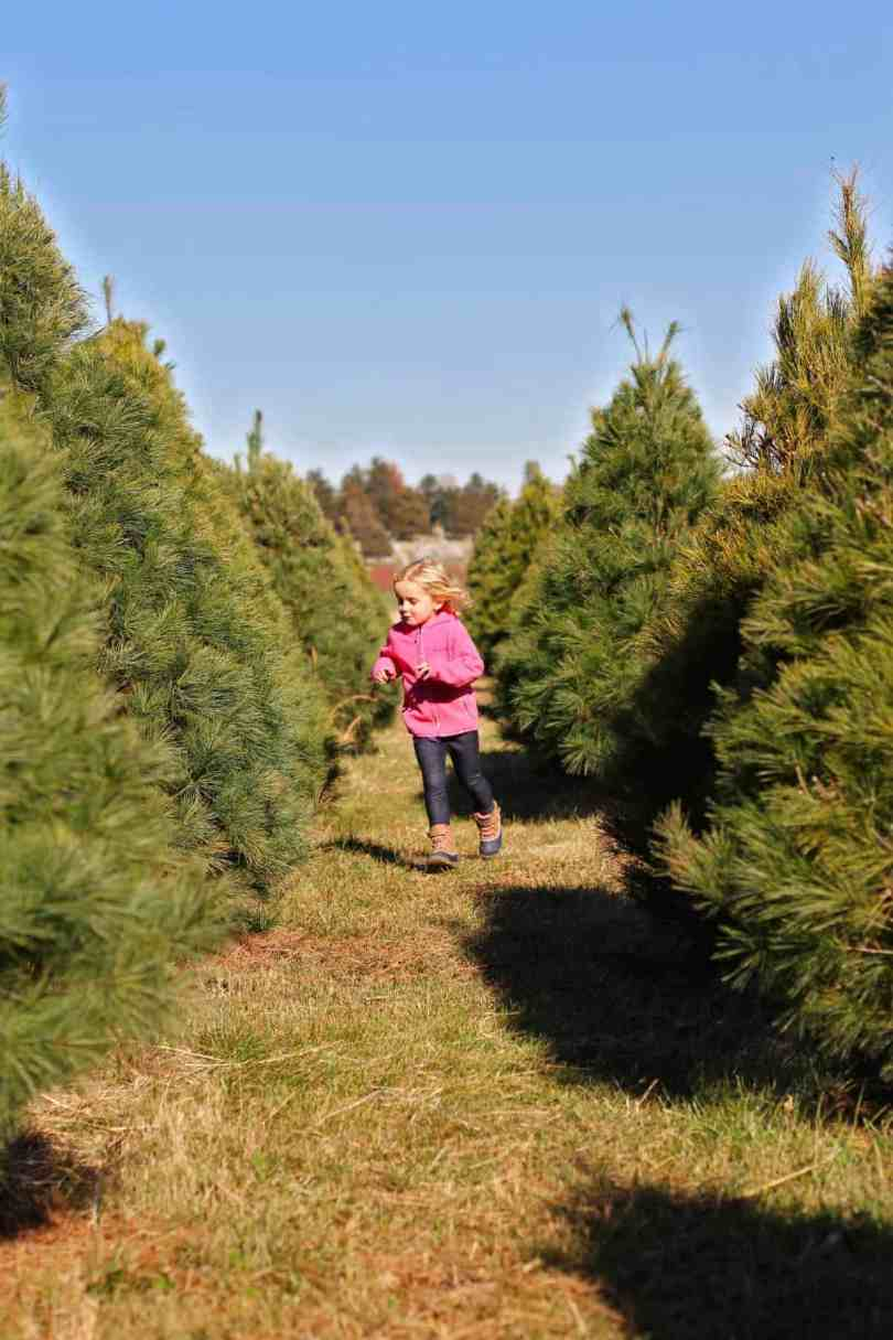 Christmas tree farm with kids