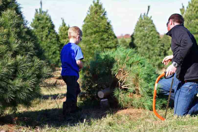 tips for cutting down your own christmas tree with kids