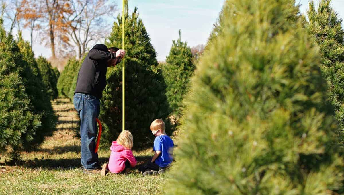 Cut Your Own Christmas Tree Near Me.10 Tips On How To Choose Cut Down Your Own Christmas Tree