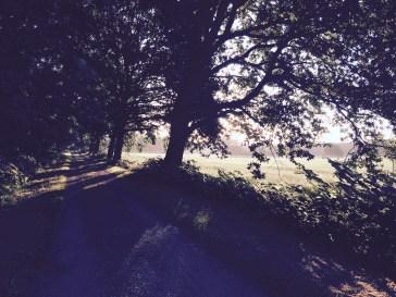 Laufen morgens im Wald 2017