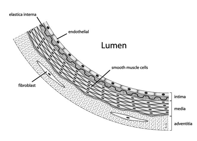 Anatomy_artery