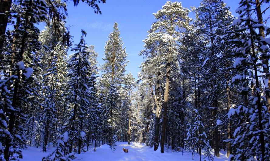 Winter Wonderland – Part 1