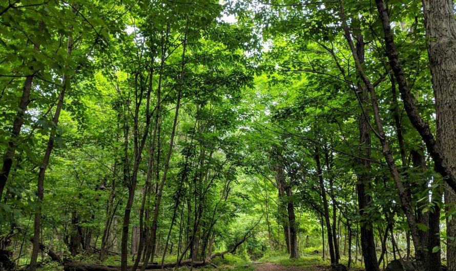 Fort Lee Historic Park hiking