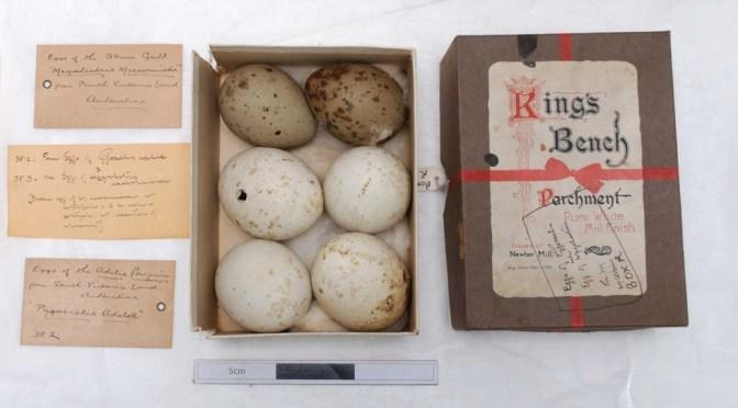 Captain Colbeck's eggs