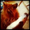 Lennie & Cookie