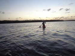 Local man on surf board with 20-litre jery canns rowing to Kirepwe Island at sunset