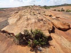 Mudanda Rock - 1.5km long
