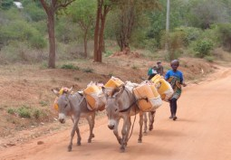 At Mutomo, woman with her donkeys and debes in search of water Copyright Rupi Mangat