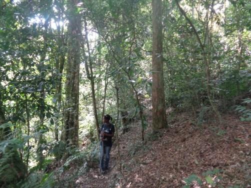 A walk in the Gatamaiyu forest - - copyright Rupi Mangat
