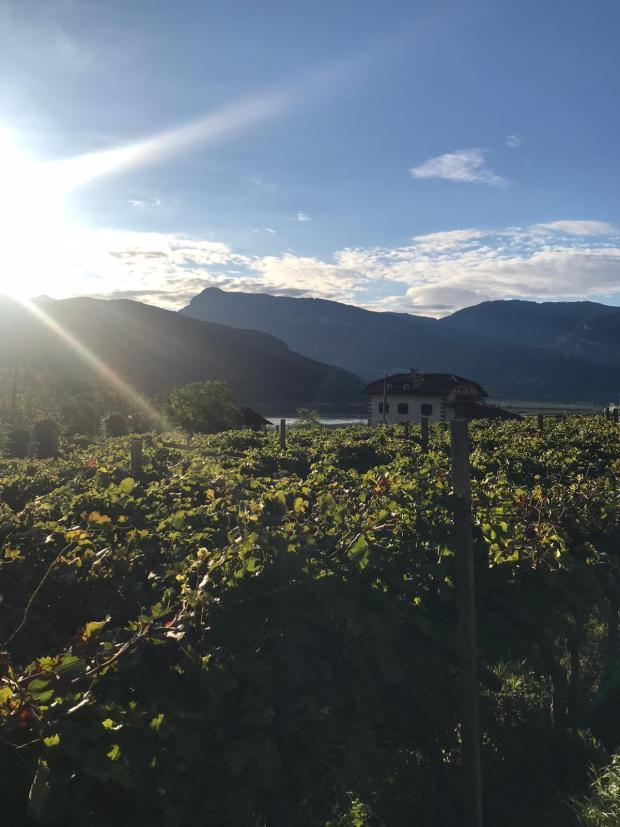 Südtiroler Weinberge
