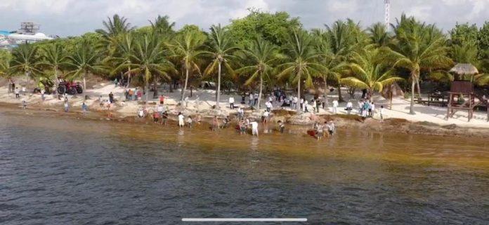 Sargazo en Playa Coral